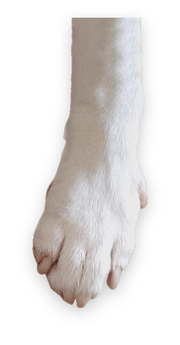 dog-paw-reach-product